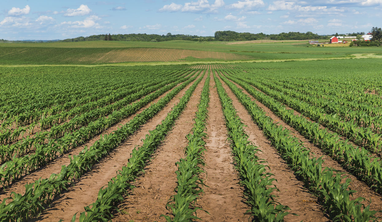 This corn crop outside Jackson, Minnesota shows good singulation and uniform emergence. A good start to the cropping year increases the chance for better yields at harvest time.