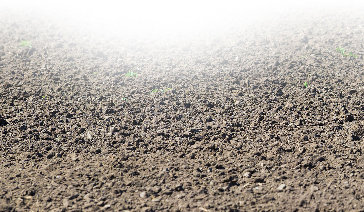 The perfect seedbed