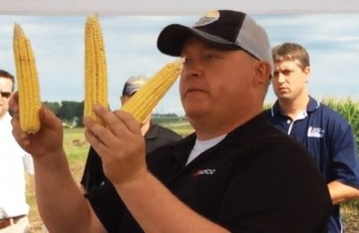Ears of corn resulting from downforce test plots