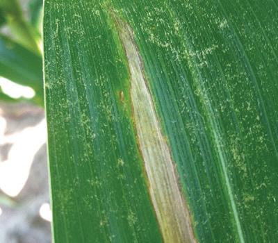 Making the case for fungicides | myFarmLife com