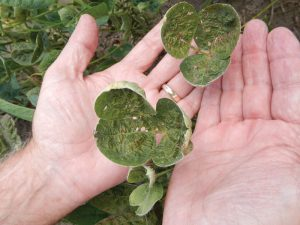 Growers learned the hard way that the herbicide often didn't stay where it was sprayed.