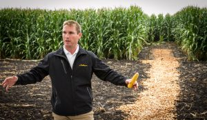 AGCO Product Specialist Steven Pranke talks about stand counts at an AGCO Crop Tour plot.